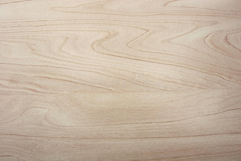 Birch wood texture royalty free stock images