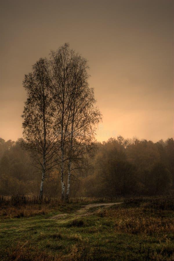 birch wschód słońca obrazy stock