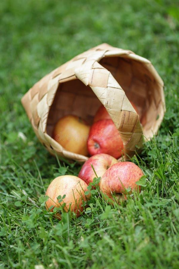 Free Birchbark Basket Full Of Gala Apples Royalty Free Stock Images - 31729779