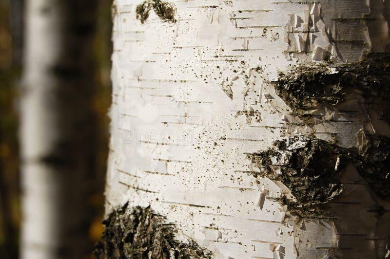 Birchen Kabel stockfotografie