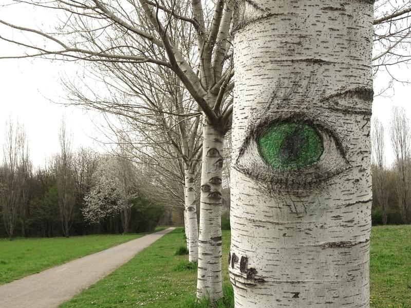 The watchful eye of nature observes you. Birches at the park in spring seem to have eyes that look at you royalty free illustration