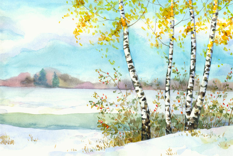 Birches in snowy field. Watercolor landscape. Yellowing of birch and wild rose in the snow-covered field near the river royalty free illustration