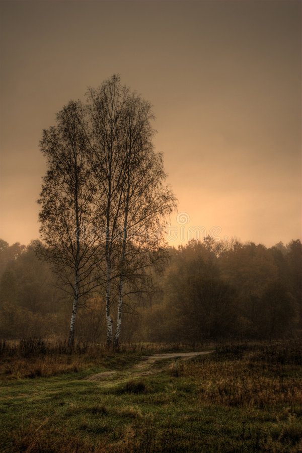 Download Birches on sunrise stock photo. Image of foliage, rural - 3425384