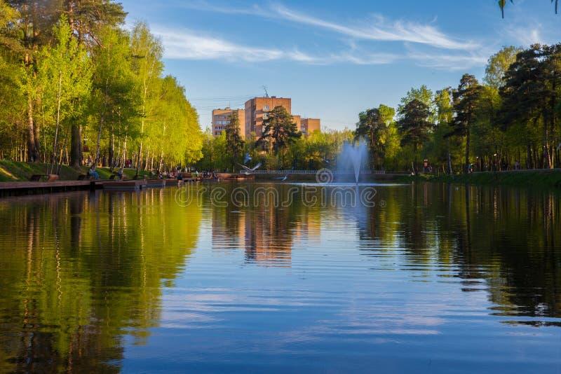Birchs e lagoa possa fotos de stock royalty free
