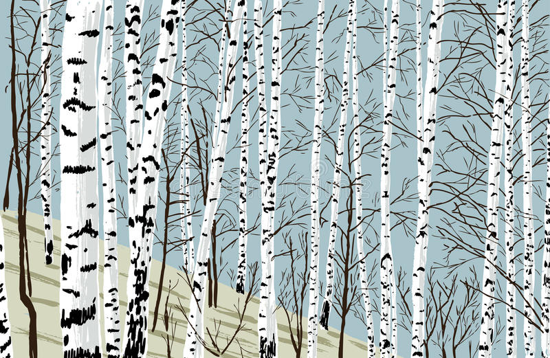 Birchwood na primavera ilustração royalty free