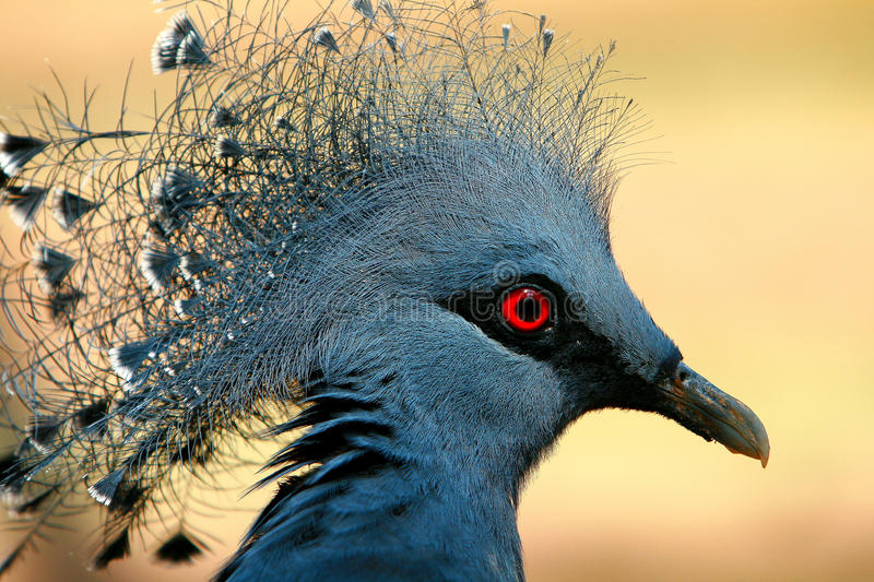 Download Bird stock image. Image of colour, exotic, beauty, blue - 14117151