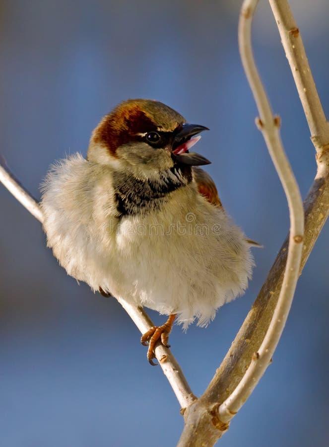 Download Bird stock photo. Image of sharp, open, nature, head - 18545294