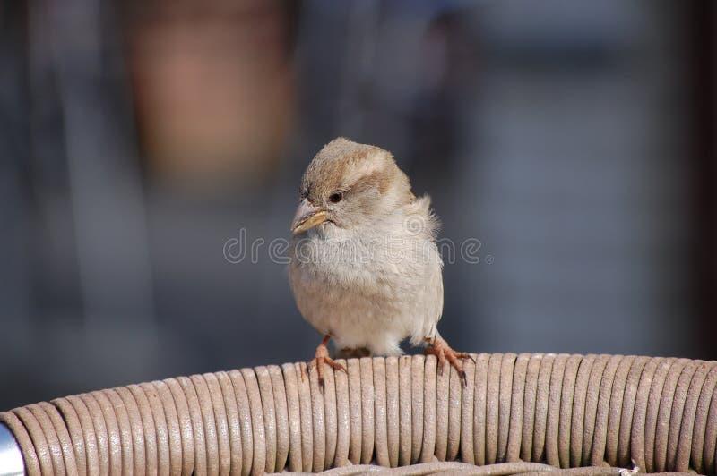 A bird stock photos