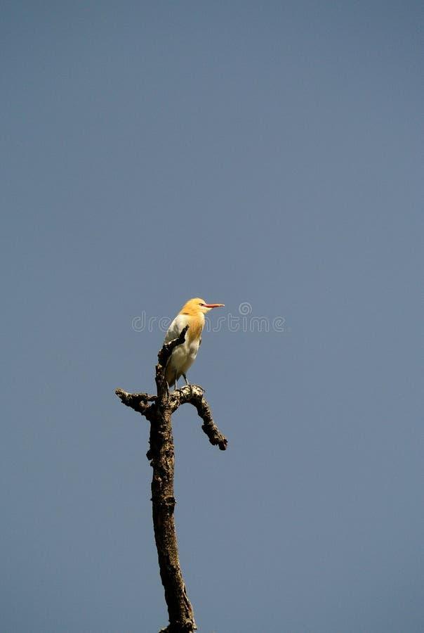 Download Bird stock image. Image of yellow, reeds, nature, ecology - 24707999