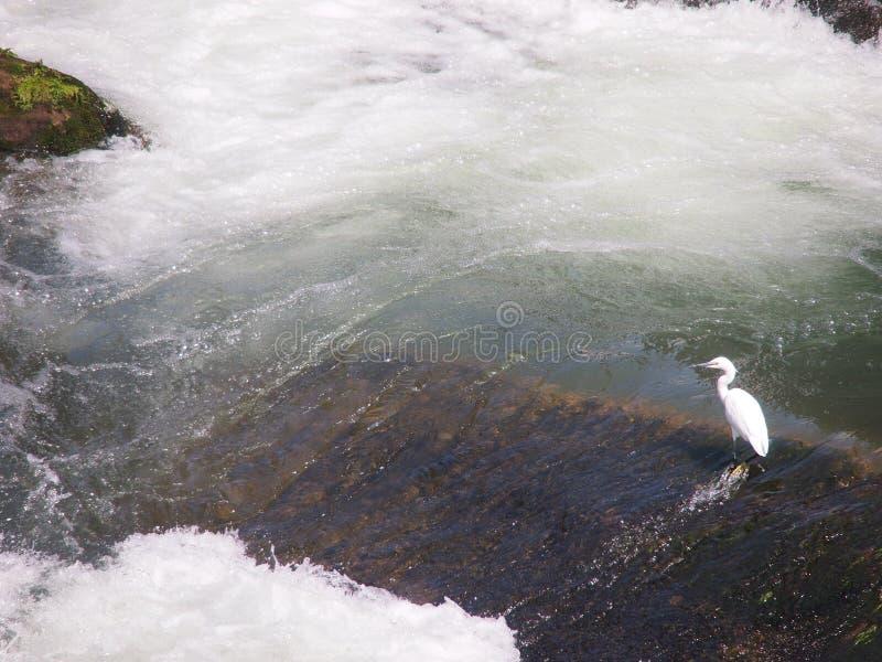 Download Bird Royalty Free Stock Image - Image: 25487336