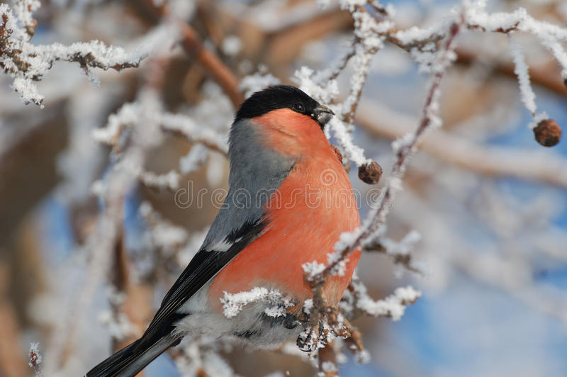Download Bird stock photo. Image of morning, tree, cute, bright - 27845626