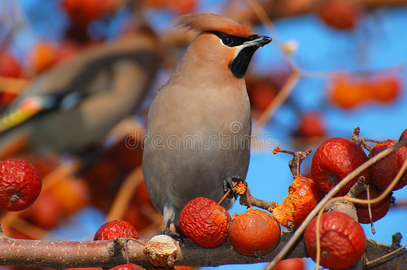 Download Bird stock photo. Image of eating, feather, down, image - 28099002