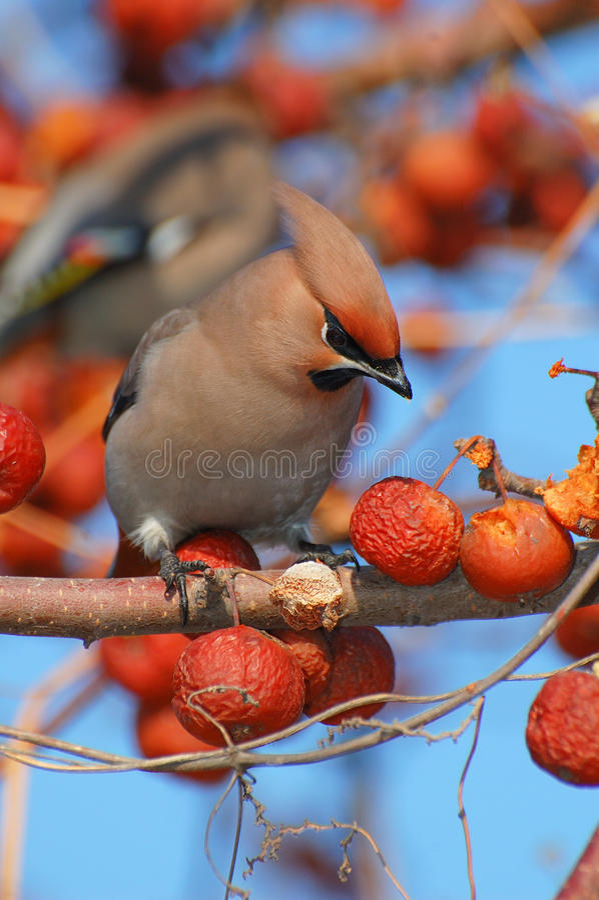 Download Bird Stock Images - Image: 28099004