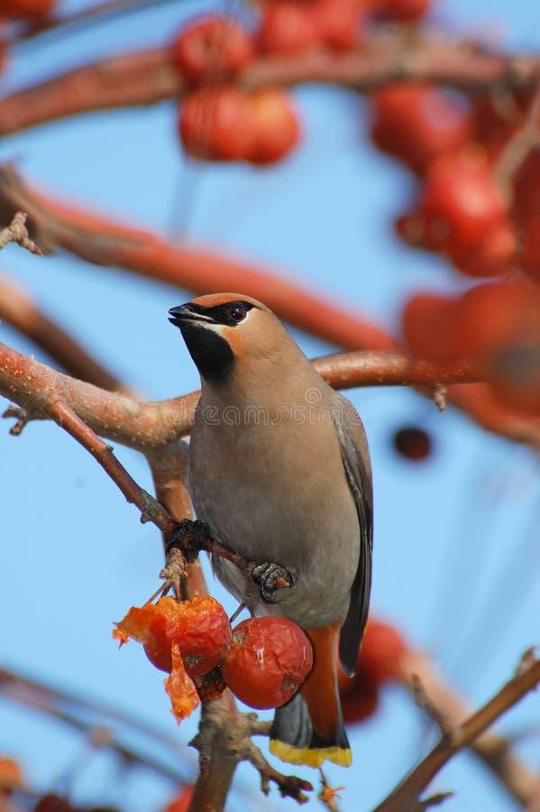 Download Bird stock photo. Image of passerine, outdoors, tree - 28099022
