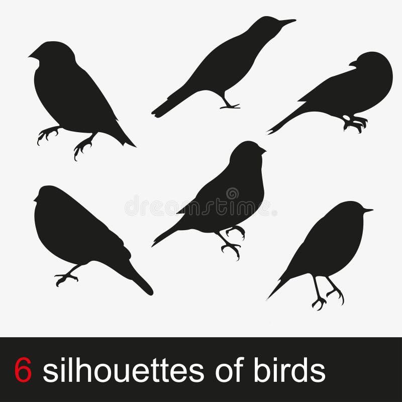 231_bird διανυσματική απεικόνιση