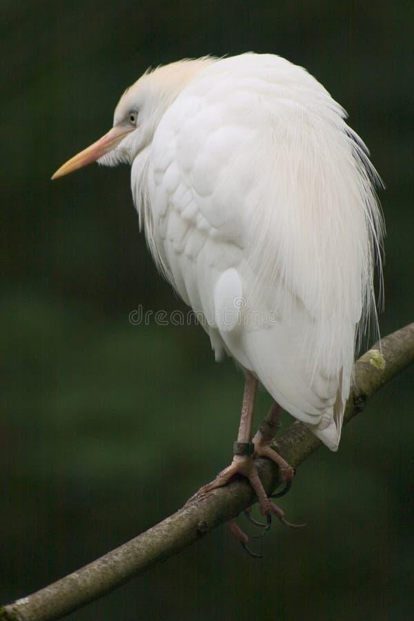 Download Bird stock image. Image of limb, white, beak, claw, feather - 39389