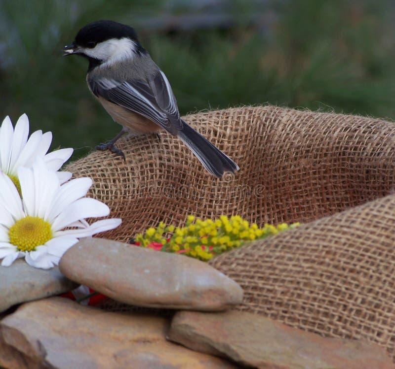 Free Bird Stock Images - 445414