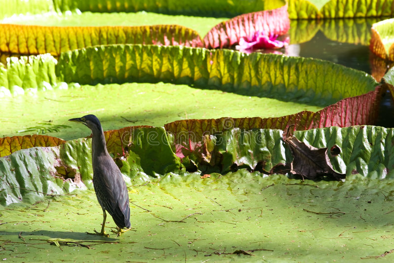 Download Bird stock image. Image of plants, water, island, flower - 5357433