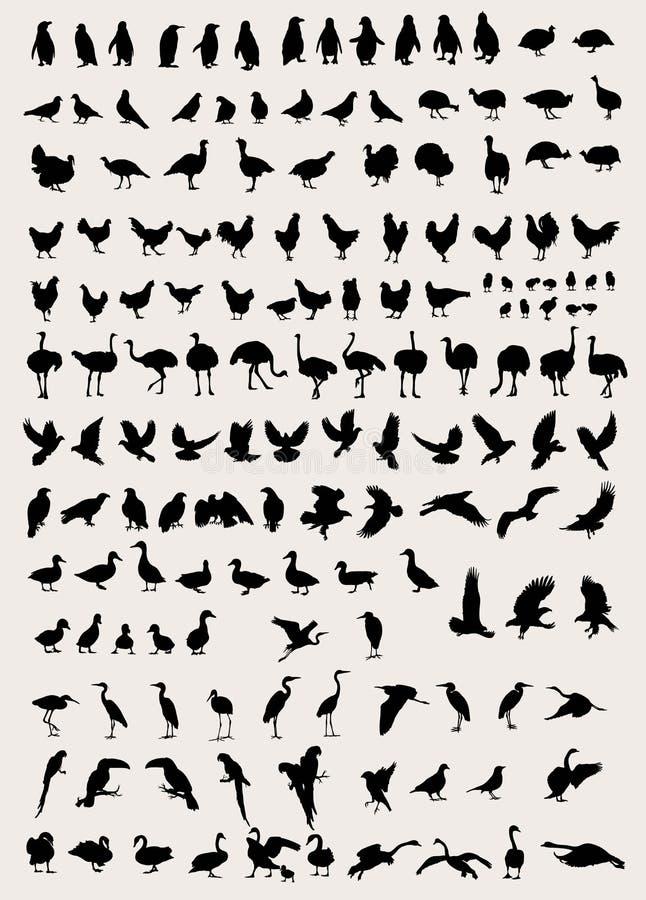 Free Bird And Fowl Silhouettes Stock Photos - 70875503