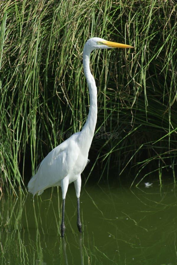 Bird Aquatic Stock Photos