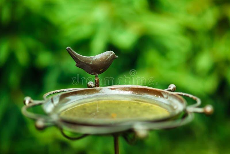Bird bath stock photos