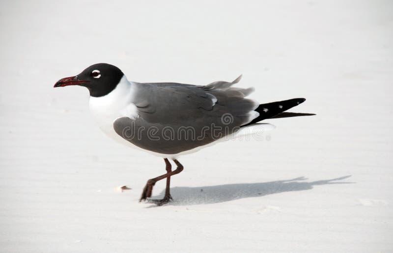 Bird On Beach Stock Image