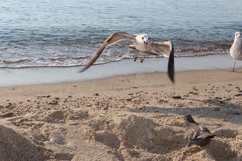 Bird on the beach royalty free stock photography