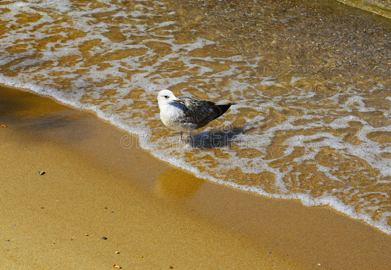 Bird on the beach royalty free stock images
