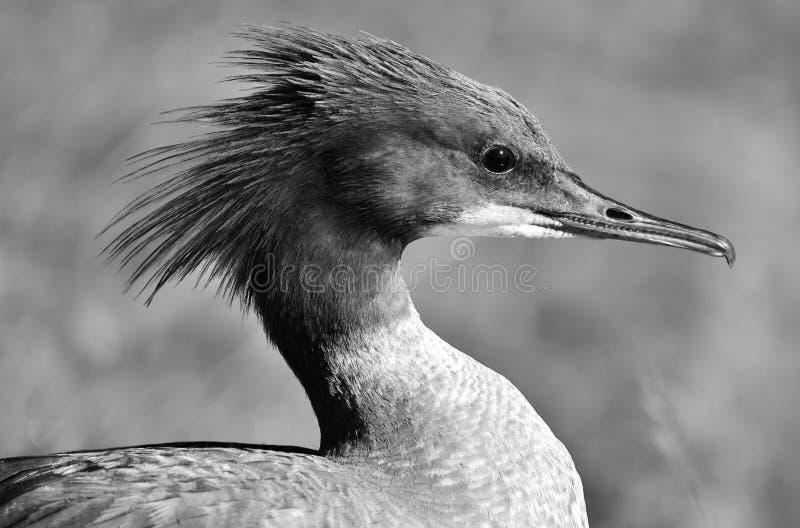 Bird, Beak, Black And White, Fauna royalty free stock photo