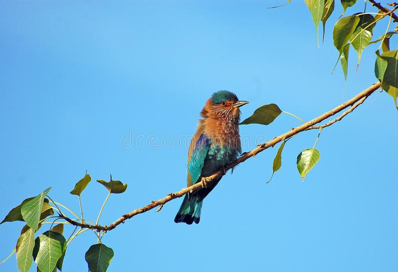 Bird, Beak, Fauna, Branch stock image