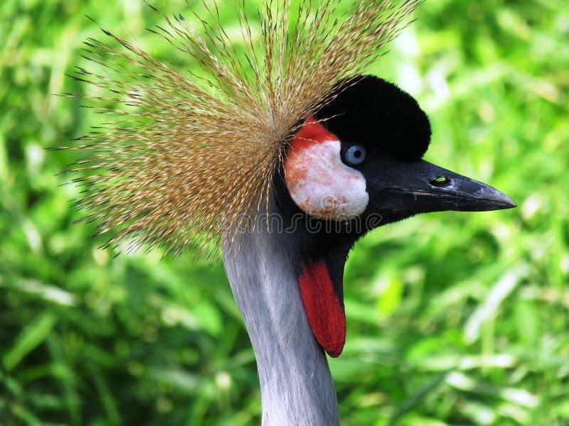 Bird, Beak, Fauna, Crane Like Bird Free Public Domain Cc0 Image