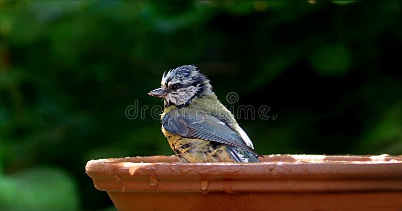 Bird, Beak, Fauna, Perching Bird Free Public Domain Cc0 Image
