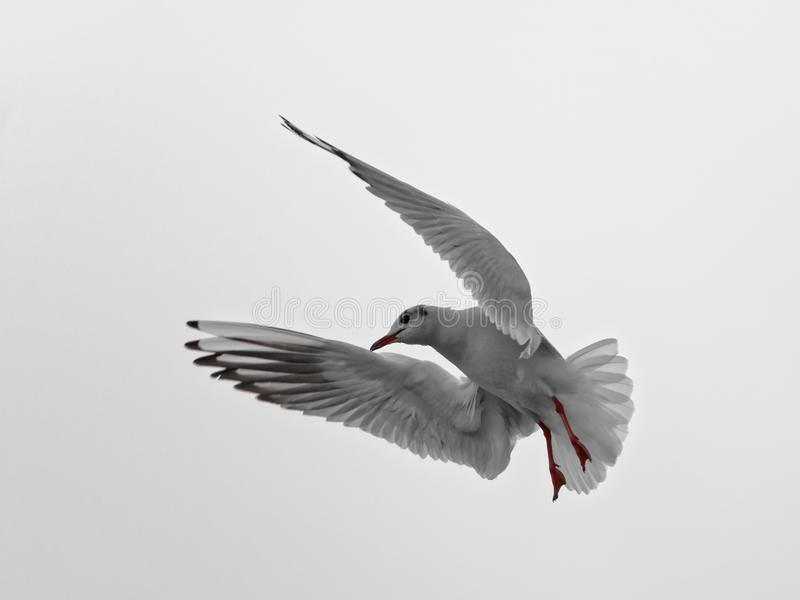 Bird, Beak, Fauna, Seabird stock photography