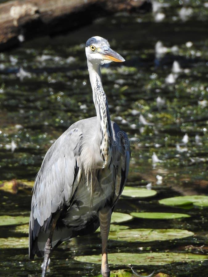 Bird, Beak, Fauna, Water royalty free stock photos