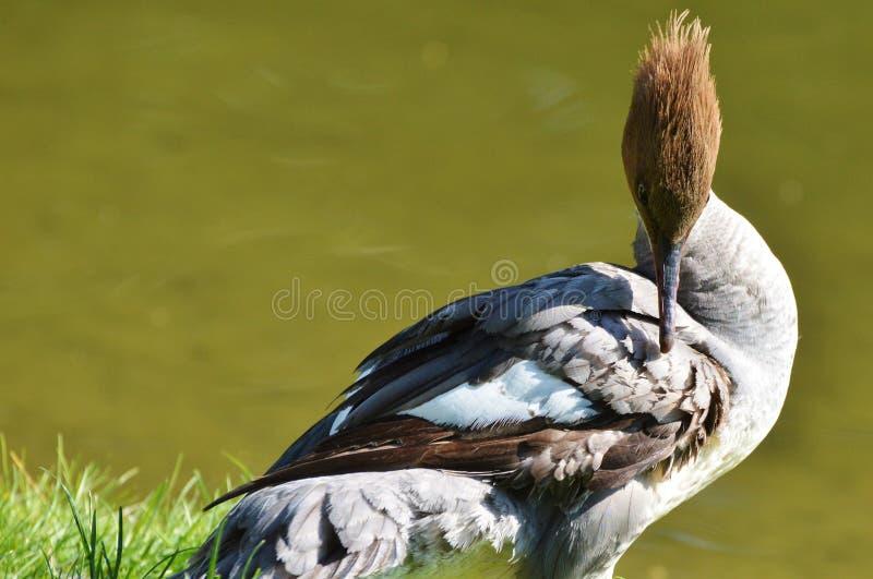 Bird, Beak, Fauna, Water Bird stock photography