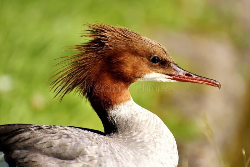 Bird, Beak, Fauna, Wildlife Free Public Domain Cc0 Image