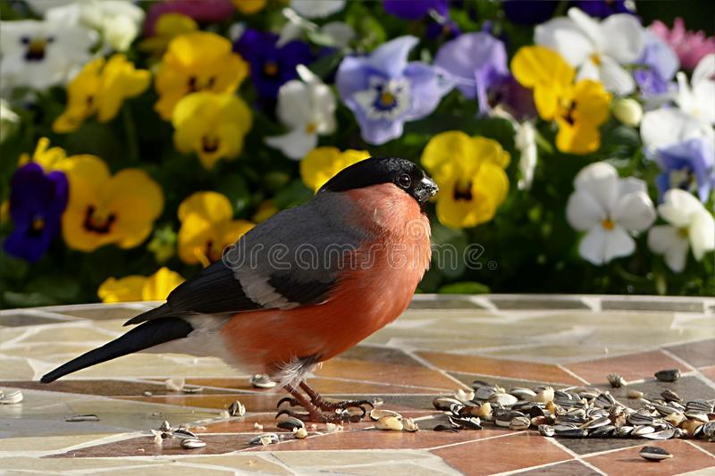 Bird, Beak, Finch, Feather stock photos
