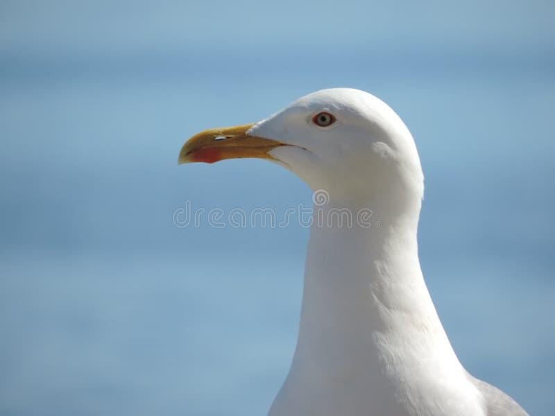 Bird, Beak, Gull, Seabird Free Public Domain Cc0 Image