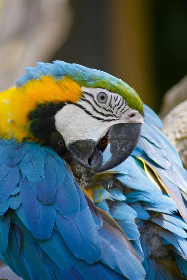 Bird, Beak, Macaw, Parrot royalty free stock image