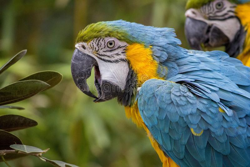 Bird, Beak, Macaw, Parrot stock photo