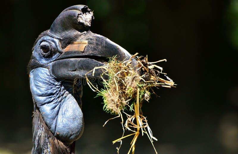Bird, Beak, Organism, Plant royalty free stock photography