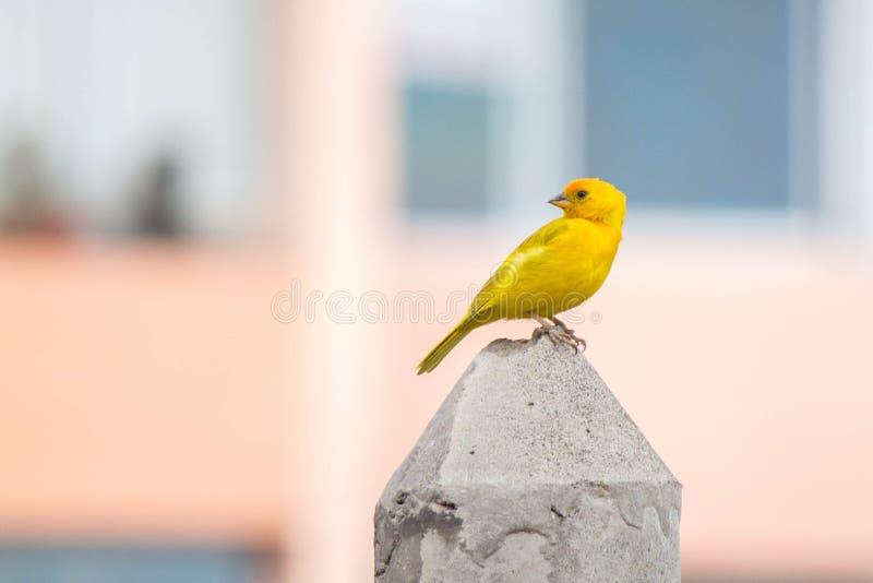 Bird, Beak, Parakeet, Fauna stock image