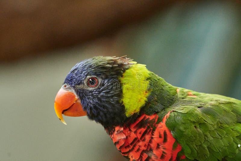 Bird, Beak, Parrot, Fauna royalty free stock photo