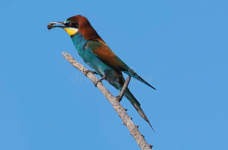 Bird, Beak, Roller, Fauna Free Public Domain Cc0 Image