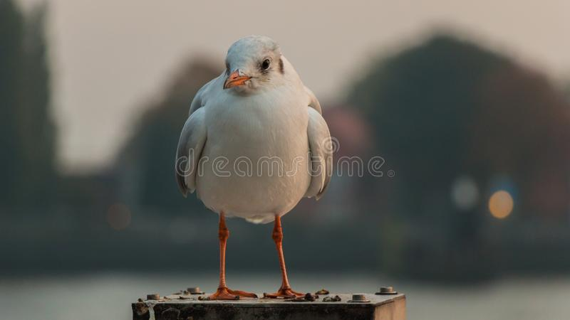 Bird, Beak, Seabird, Fauna royalty free stock image