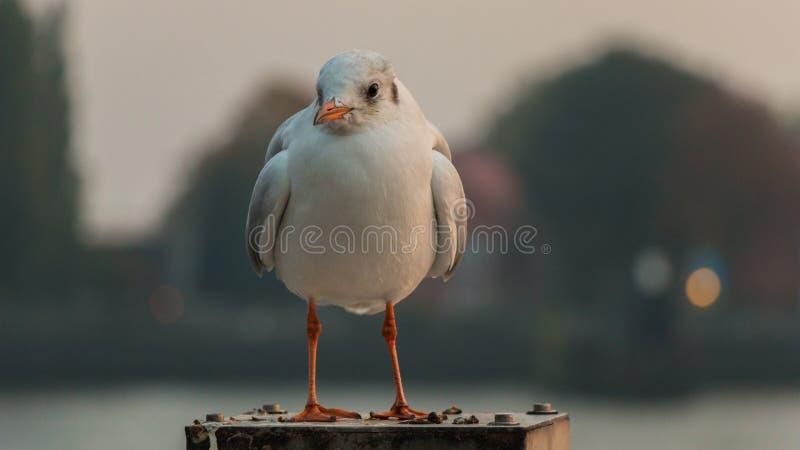 Bird, Beak, Seabird, Fauna Free Public Domain Cc0 Image
