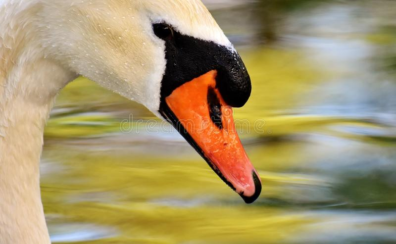Bird, Beak, Water Bird, Fauna stock image