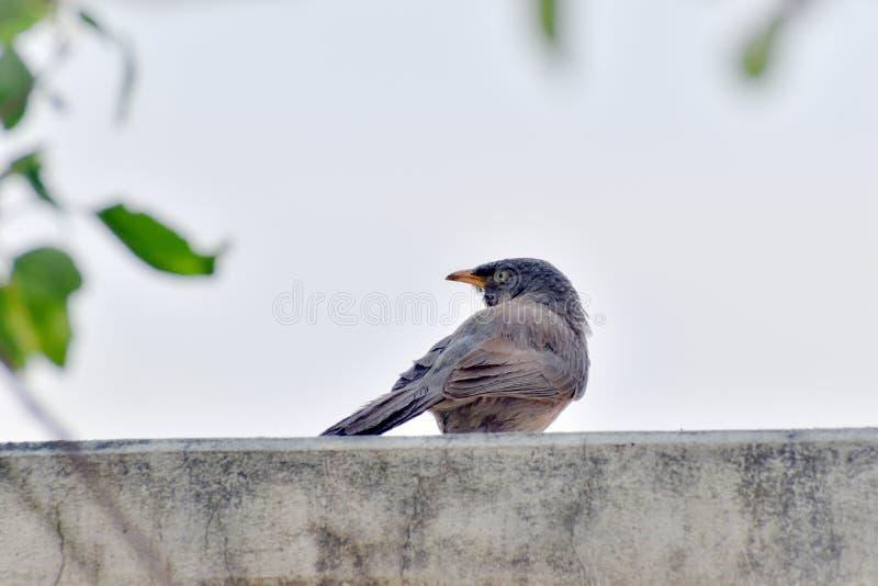 Bird royalty free stock image