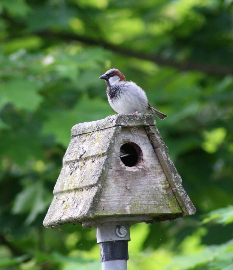 Bird on a birdhouse royalty free stock image