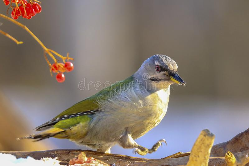 Bird. S filmed in northern China royalty free stock image